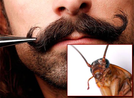Строго говоря, общего между усами мужчины и таракана не так уж и много...