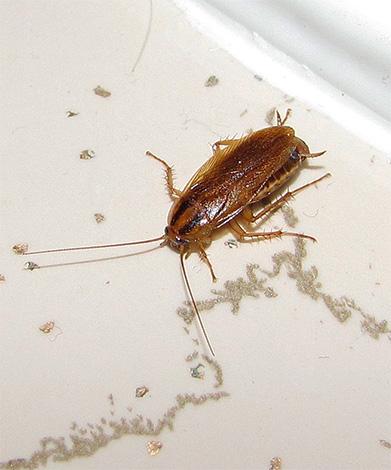 Основные трудозатраты при уничтожении тараканов дымовой шашкой будут связаны с подготовкой квартиры к этой процедуре...