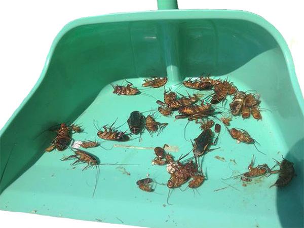 Перед тем как пускать в квартиру домашних животных, важно вымести всех мертвых тараканов и провести влажную уборку.