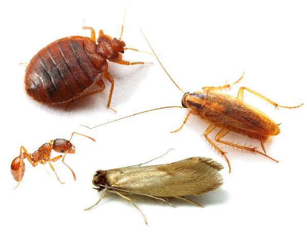 Выясняем, как правильно вести борьбу с насекомыми в доме, квартире или на даче с применением современных методов и инсектицидных средств...