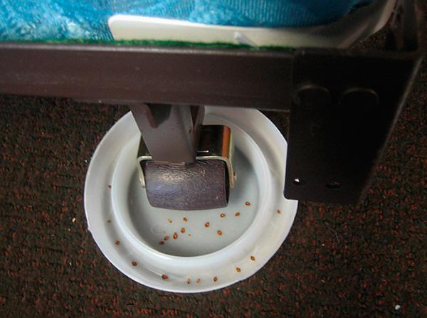 Клеевые ловушки, установленные под ножками кровати, остановят клопов и не дадут им покусать спящего человека.