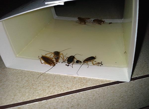 Клеевые ловушки разных конструкций могут применяться не только против ползающих насекомых, но и против летающих тоже.