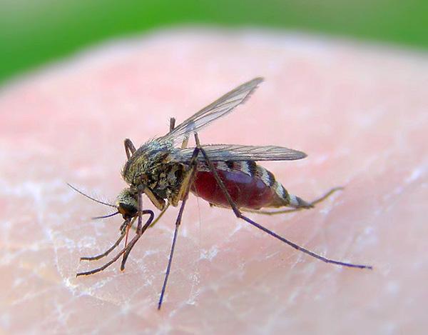 На ультразвук малой мощности реагируют лишь комары, да и то не всегда.