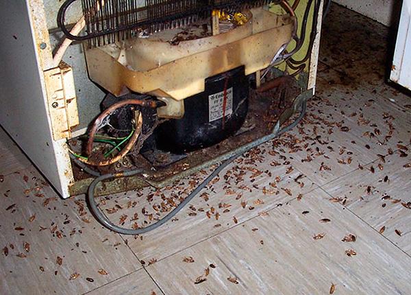 В запущенных случаях следует сочетать инсектицидные карандаши с гелями от тараканов и аэрозольными препаратами.