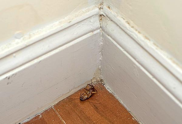 Единичные особи вредителей, проникающие, например, от соседей, обречены на гибель после контакта с частицами инсектицидного карандаша.