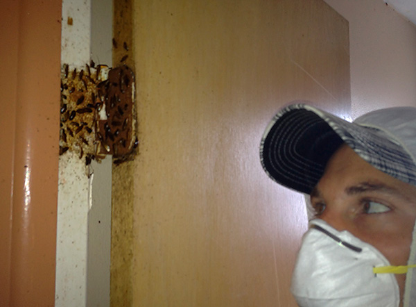 Особенно высокий эффект дает обработка Дихлофосом мест скопления тараканов.