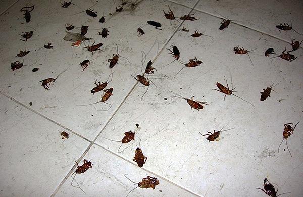 Аэрозольные средства на основе синтетических пиретроидов довольно эффективны, и позволяют уничтожить тараканов в квартире буквально за несколько часов.