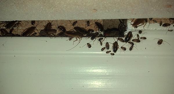 При большом количестве тараканов в доме целесообразно комбинировать шприц-гель с использованием дополнительных средств.