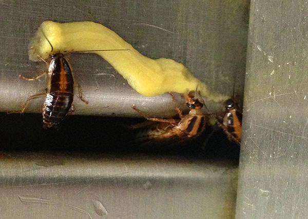 Инсектицидные гели начали активно применяться еще в 90-х годах, имея ряд важных преимуществ перед другими средствами от тараканов.