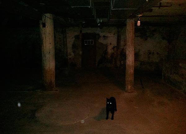 В подвалах домов часто обитают бродячие кошки и собаки, зараженные блохами.