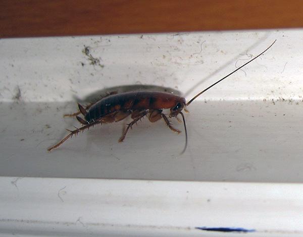 Чтобы тараканы вновь не размножились в квартире, важно перекрыть все пути их проникновения сюда.
