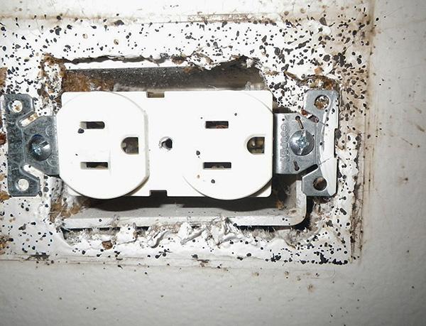 Клопы от соседей могут забираться в вашу квартиру даже через розетки в стенах.
