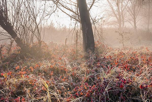 Клещи могут зимовать как в почве, так и под корой деревьев, а также в гнездах птиц.