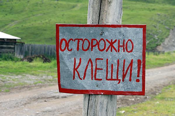 В России пик активности клещей приходится на летние месяцы.