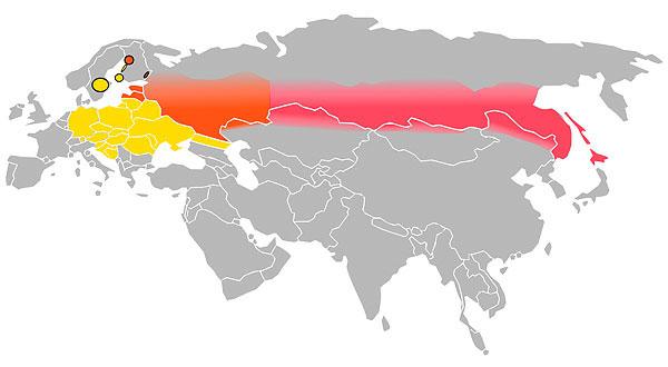 Желтым цветом указана область распространения европейского серотипа вируса клещевого энцефалита, розовым - азиатского, красным - смешанный ареал.