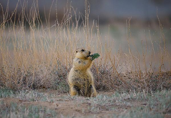 Ареал обитания иксодовых клещей очень широк, и во многом определяется ареалом распространения позвоночных животных.
