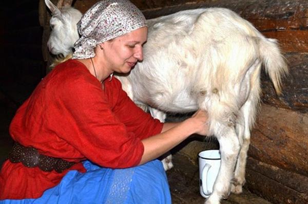 Заражение КЭ может произойти также при употреблении сырого козьего или коровьего молока.