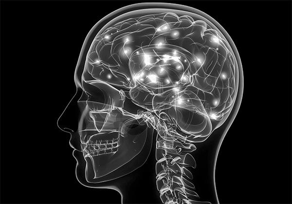 Головной мозг является оптимальным местом для размножения вируса КЭ.