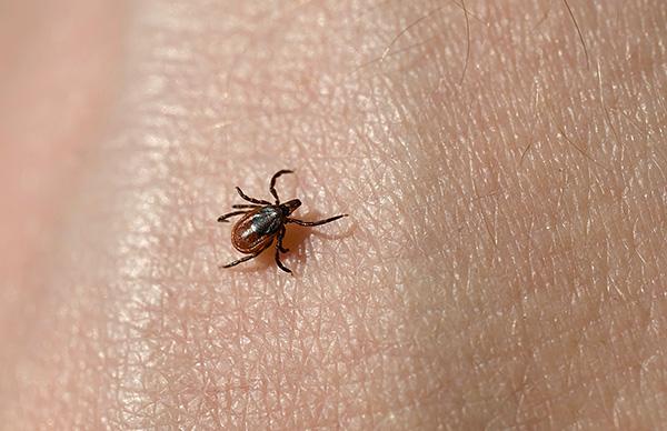 К счастью, далеко не каждый укус паразита (даже являющегося носителем инфекции) приводит к заболеванию человека.