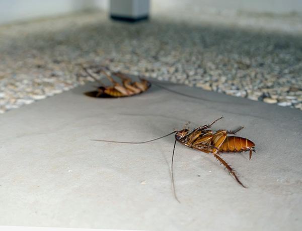 Экспресс-система Раптор хорошо подходит для профилактической защиты квартиры от размножения здесь проникающих извне тараканов.