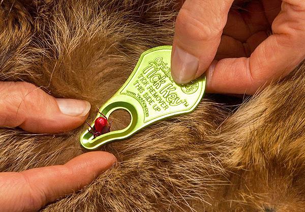Устройство для удаления клещей Tick Key