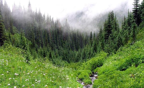 В России клещи обитают во всех типах лесов - хвойных, лиственных и смешанных.