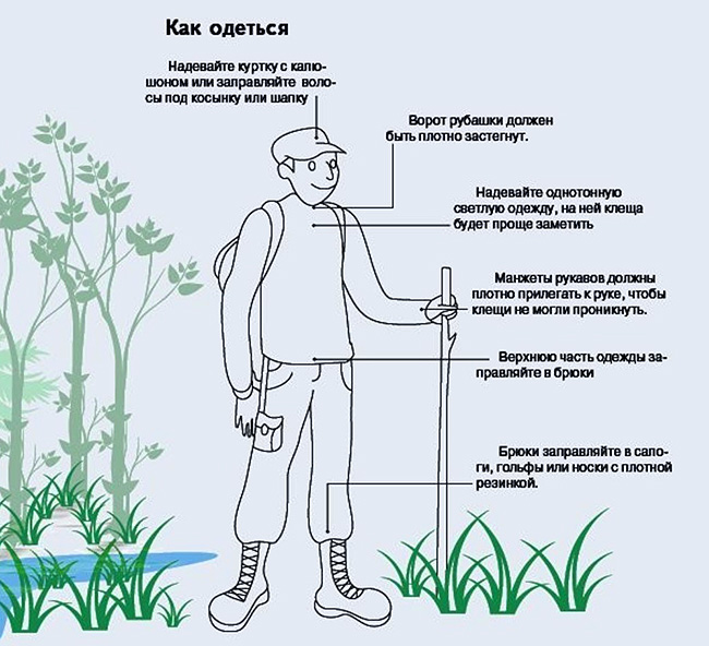 Как одеться для защиты от клещей в лесу