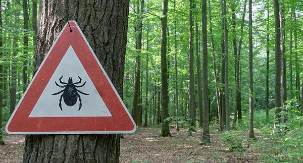 Сегодня обработка лесов от клещей не производится.