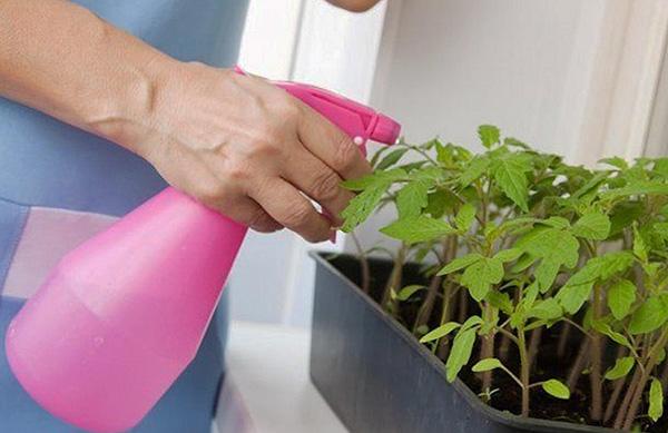 Самый оптимальный способ уничтожения паутинного клеща - применение химических средств (инсектоакарицидов).