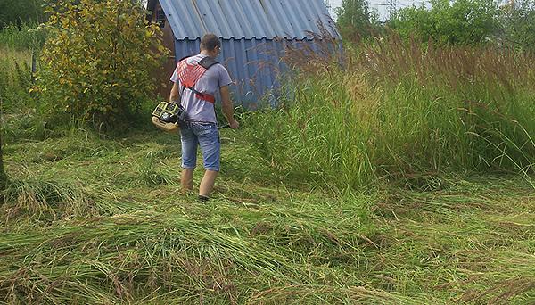 Перед обработкой полезно скосить траву на участке.