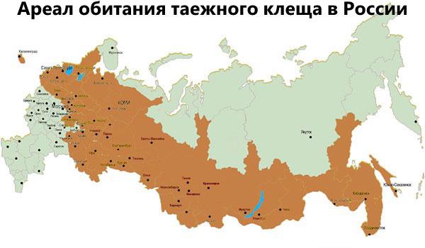 Ареал обитания таежного клеща в России
