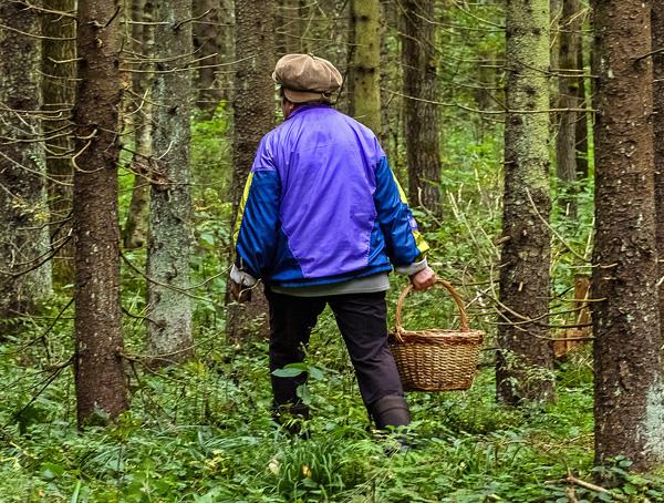 Правильная одежда для похода в лес