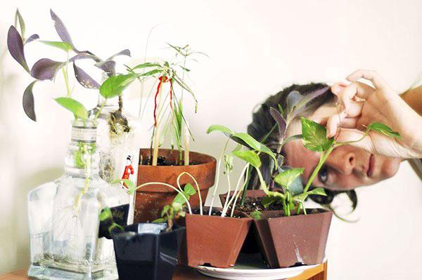 Осмотр растения после покупки на предмет паразитов