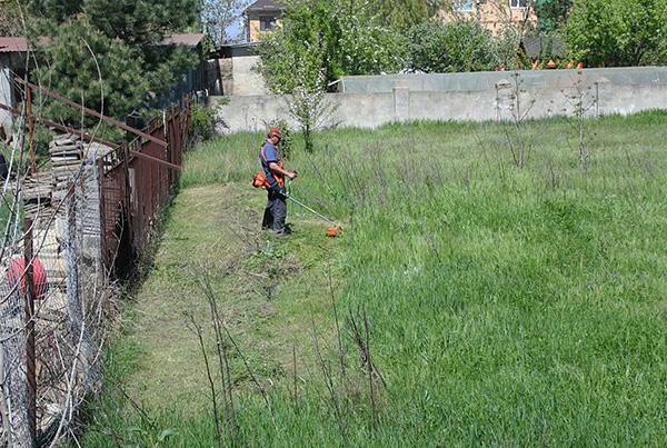 После выкашивания травы ее следует убрать с участка еще до обработки территории.