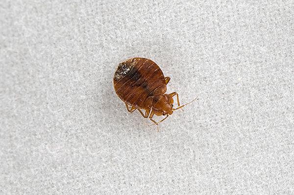 Палач Супер является быстродействующим препаратом, эффективно уничтожая насекомых как при прямом попадании раствора, так и в высохшем состоянии.